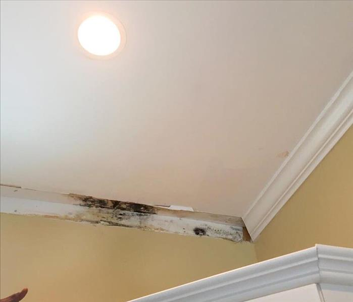 Ceiling and crown molding in a kitchen with mold growth