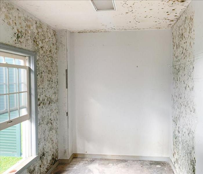 empty room with a window, the walls are covered in mold growth