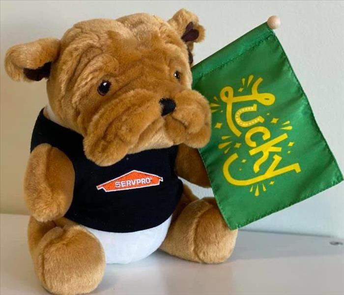 Picture of stuffed bulldog in a SERVPRO shirt holding a green flag that says