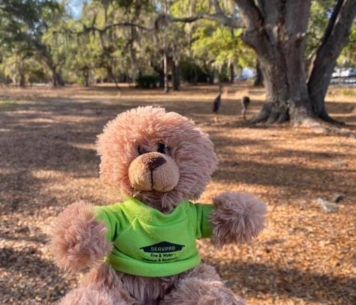 Tan teddy bear wearing green shirt posed in front of a tree in an empty yard.
