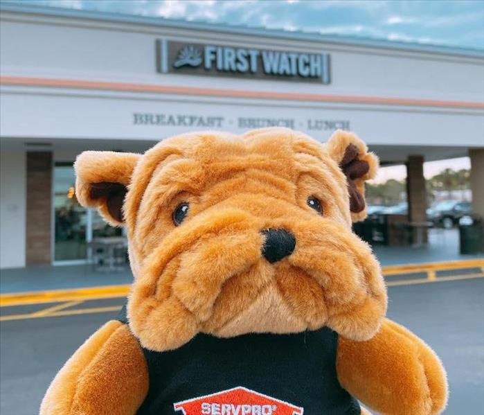 Photo of bulldog plushie held up in front of the store front for First Watch restaurant