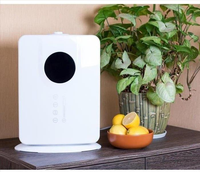 air purifier on a table with a plant and citrus