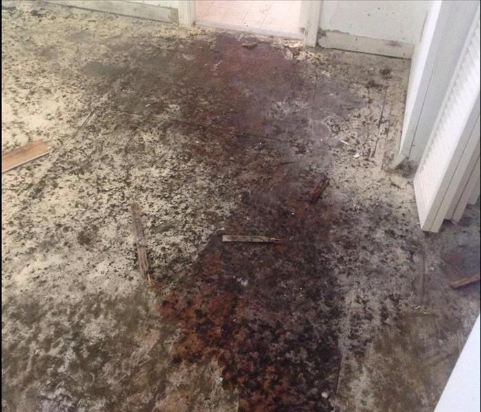 Why Mold Removal May Not Be An Ideal Diy
