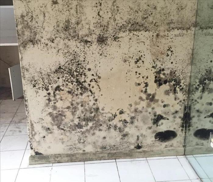 Mold Remediation Does Your Vero Beach Home have A Mold Problem?
